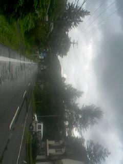 雨、今頃上りました
